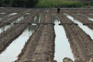 Agricultura/Medio Ambiente