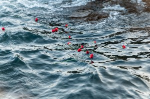claveles-mar