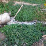 La Guardia Civil investiga en Orihuela un vertido tóxico en un canal de riego