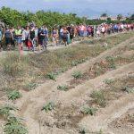 Suspendido.La sexta edición de la ruta histórica de la huerta tradicional que tendrá lugar este domingo día 15 incluye una visita al museo etnográfico de Rojales